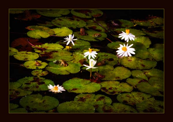 Frogs Fine Art Photo by Warner Photography in Midland Michigan